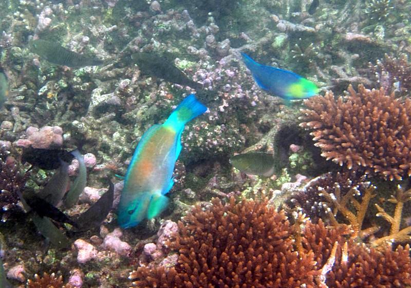 feb 04 1994 parrot fish