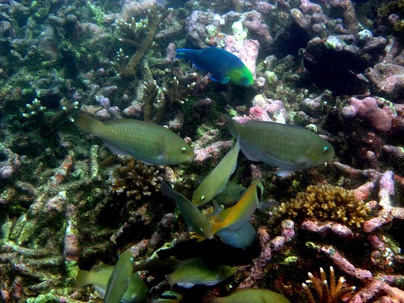 numerous majestic fish essay