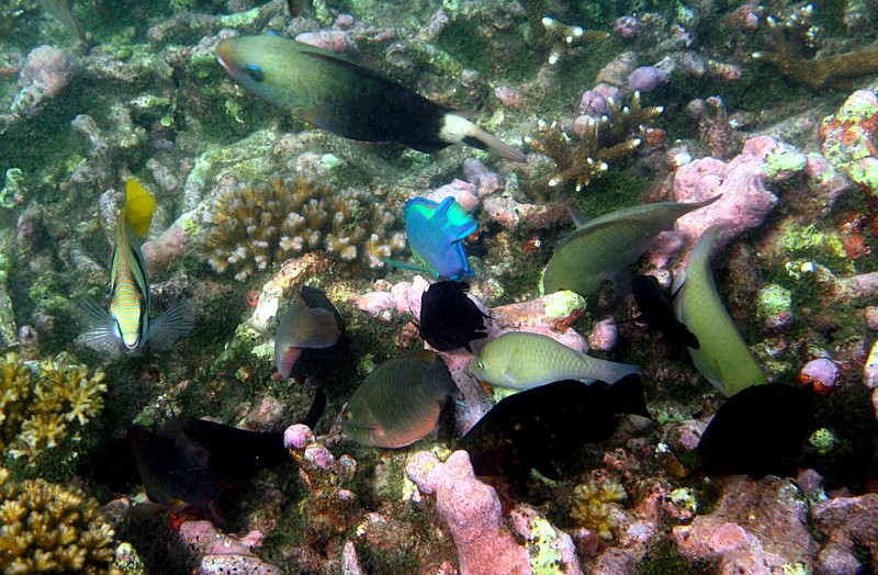 feb 04 2012 many fish