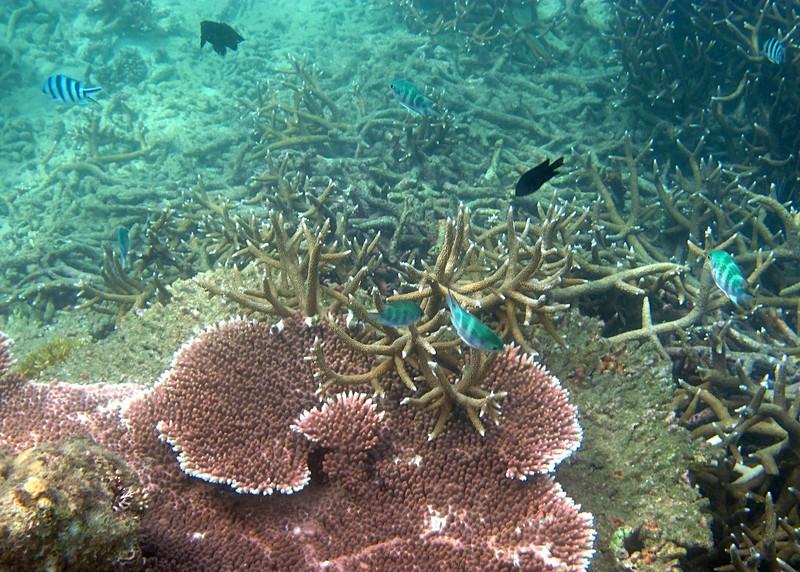 feb 04 2059 acropora fish
