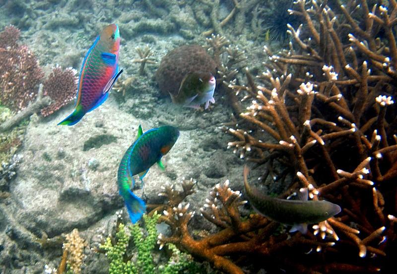 feb 04 2090 parrot fish