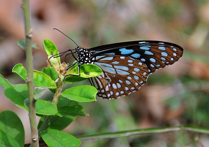 feb 04 6022 butterfly