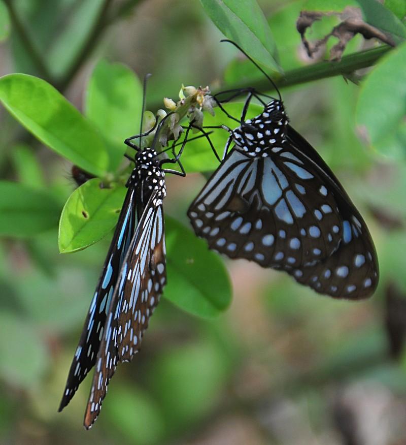 feb 04 6024 two butterflies