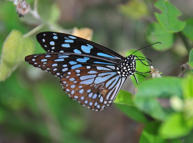feb 04 6035 butterfly