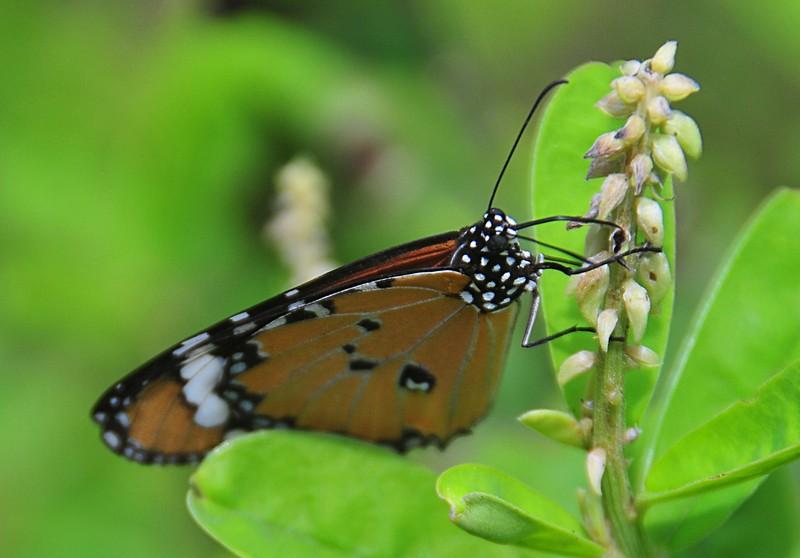 feb 04 6037 butterfly