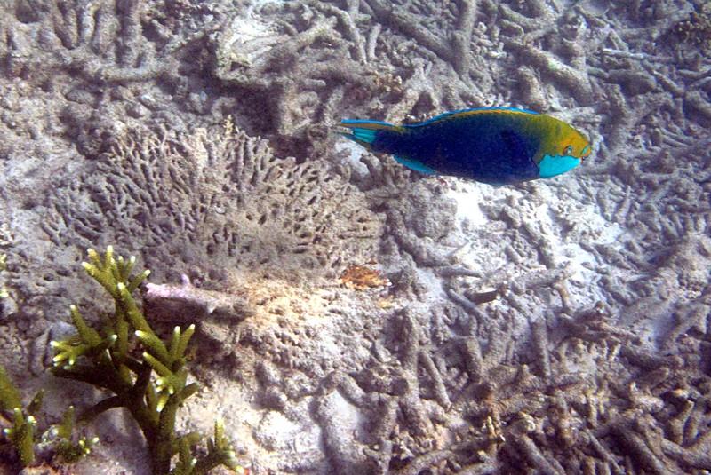feb 05 2385 parrot fish