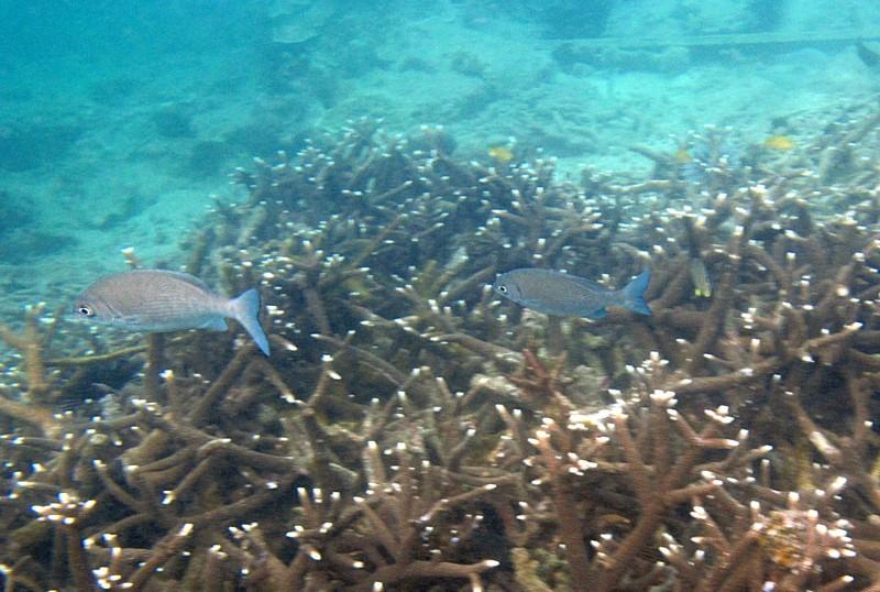 feb 05 2404 fish