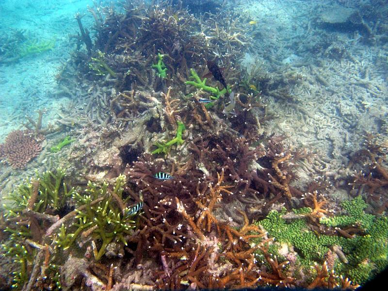 feb 05 2407 coral fish