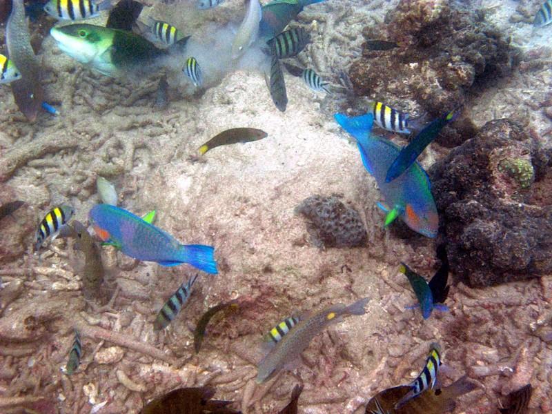 feb 05 2454 parrot fish