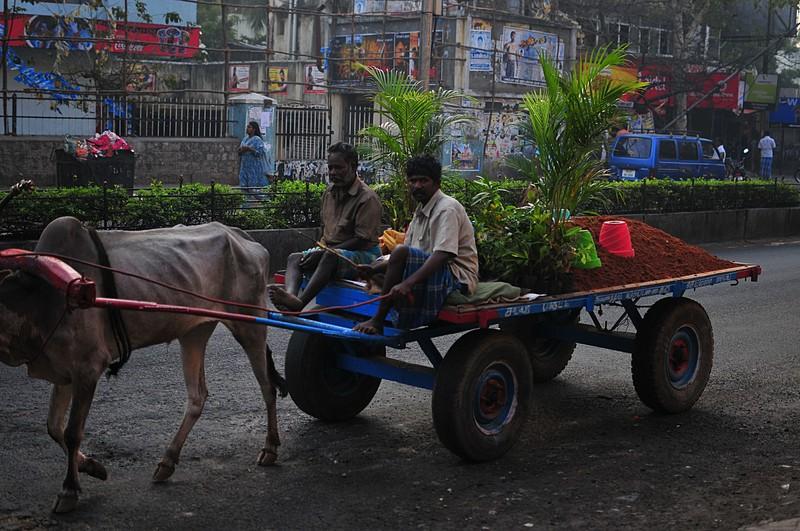 feb 05 6606 hauling palms