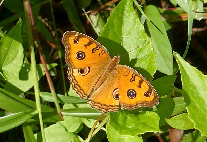 feb 11 0235 butterfly