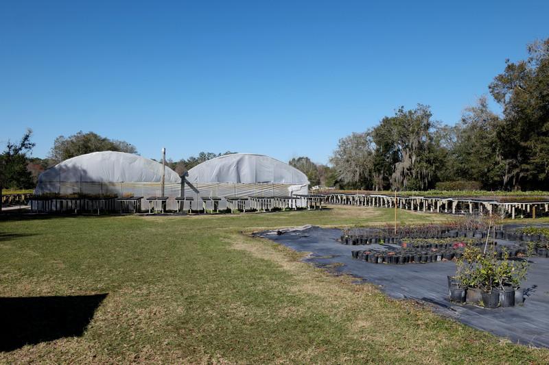 feb 11 4946 turkey creek nursery
