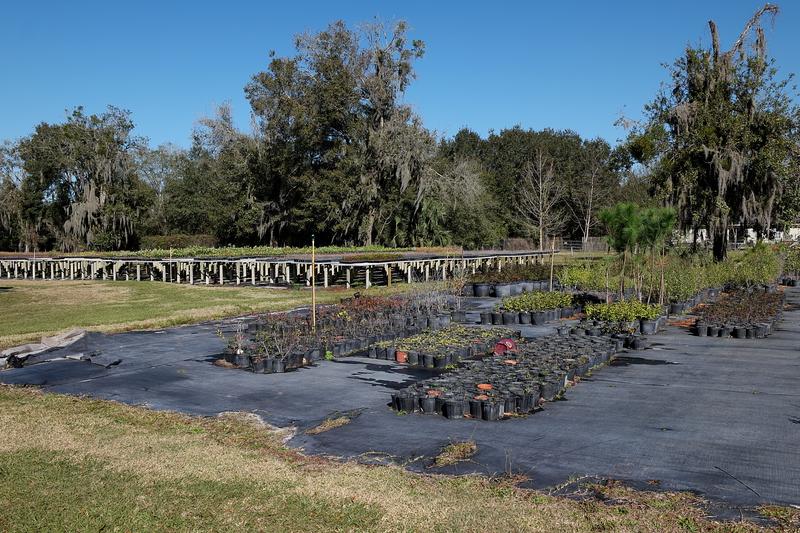 feb 11 4947 Planting tables