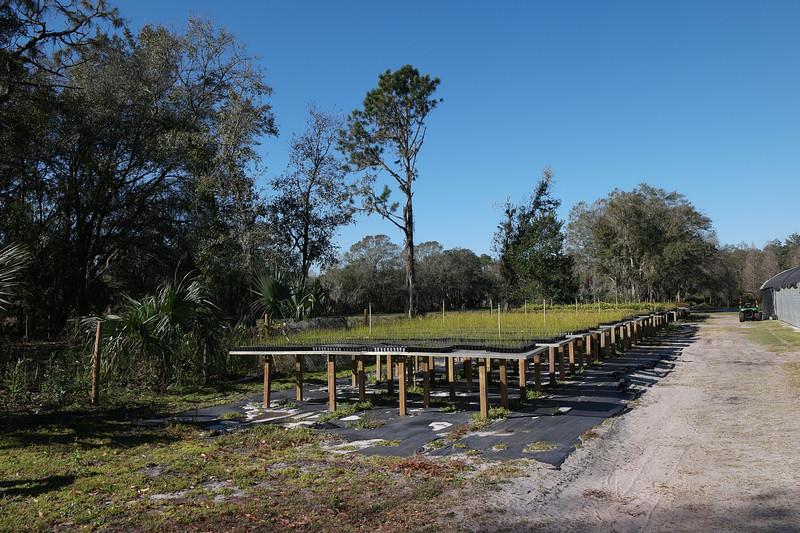 feb 11 4949 planting tables