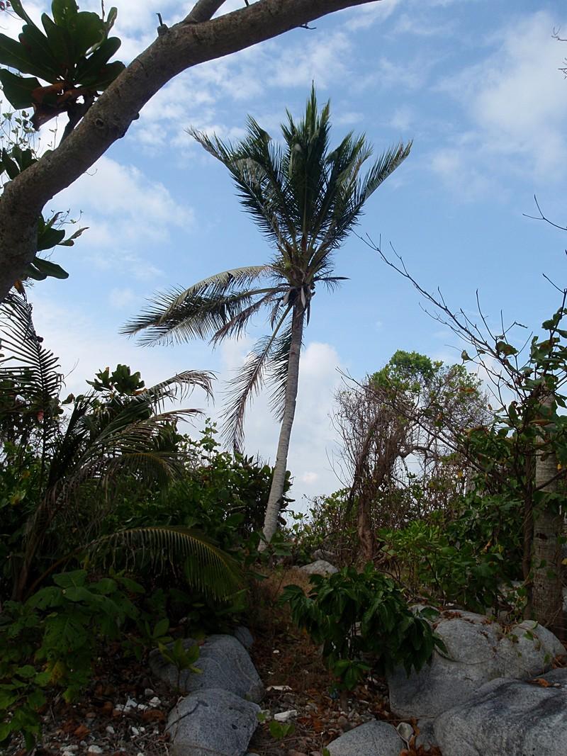 feb 12 1134 lone palm