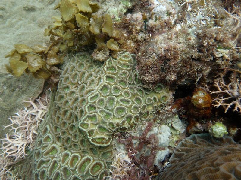 feb 12 1137 green coral