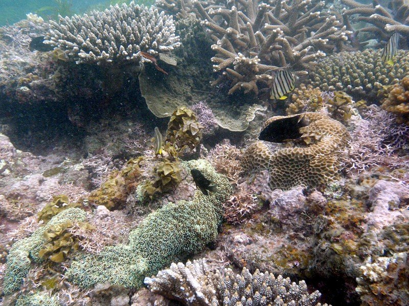 feb 12 1139 island coral fish