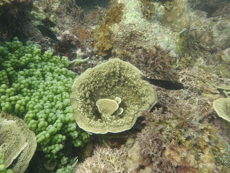 feb 12 1160 fish coral