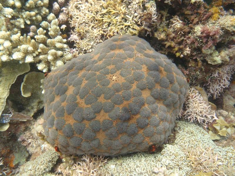 feb 12 1163 gray spots coral