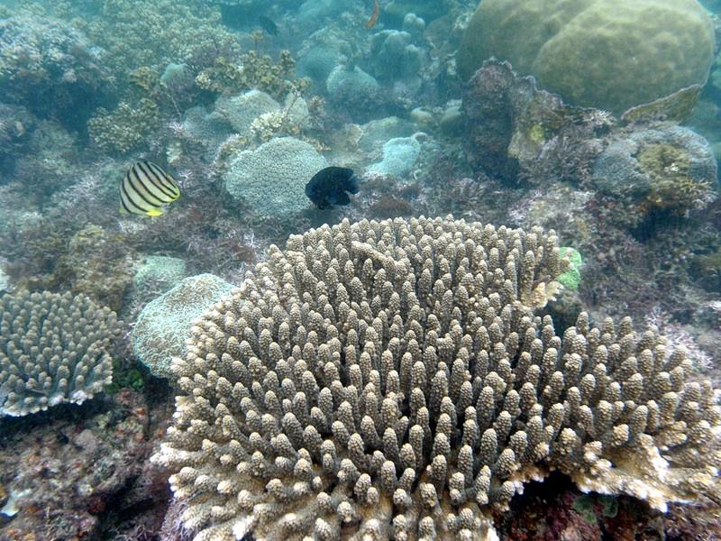 feb 12 1179 coral fish