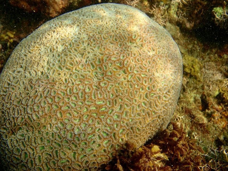 feb 12 1200 coral