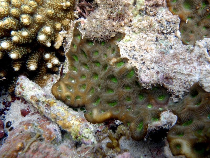 feb 12 1216 green coral