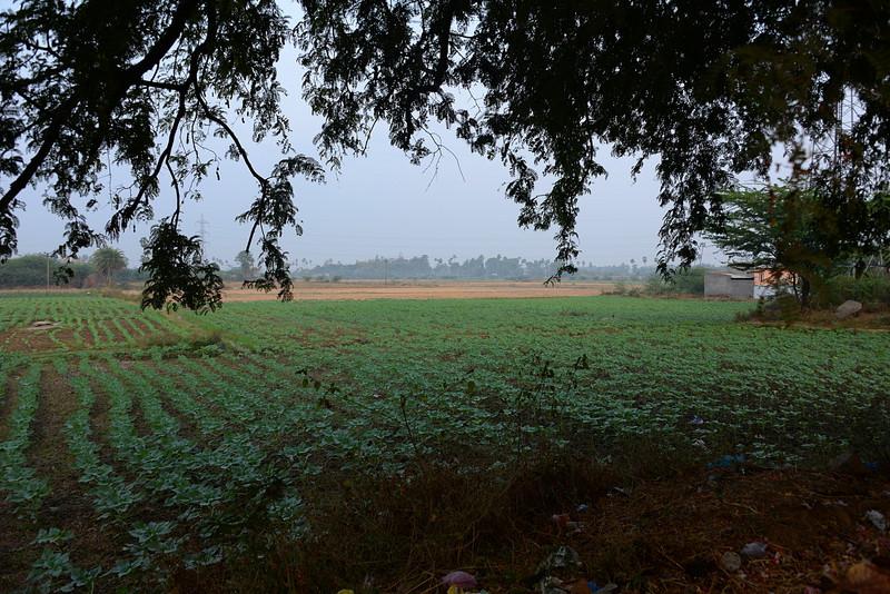 feb 14 0072 fields