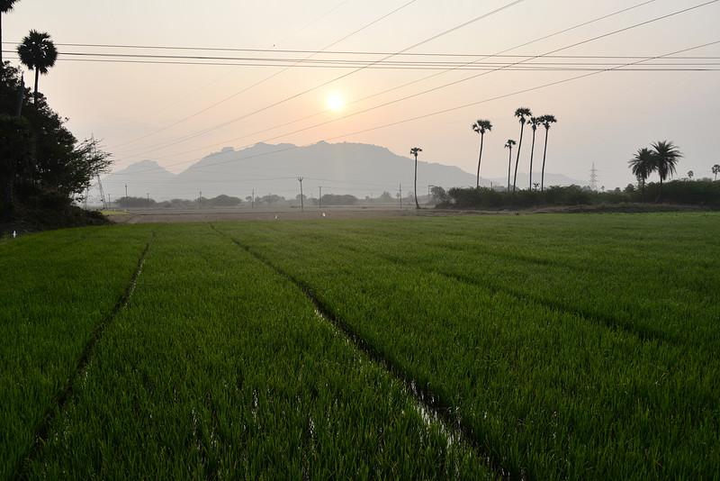 feb 14 0104 rice fields