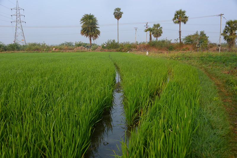feb 14 0123 irrigation