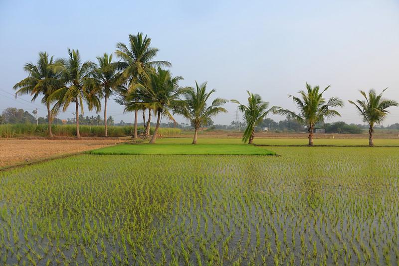 feb 14 0136 new rice