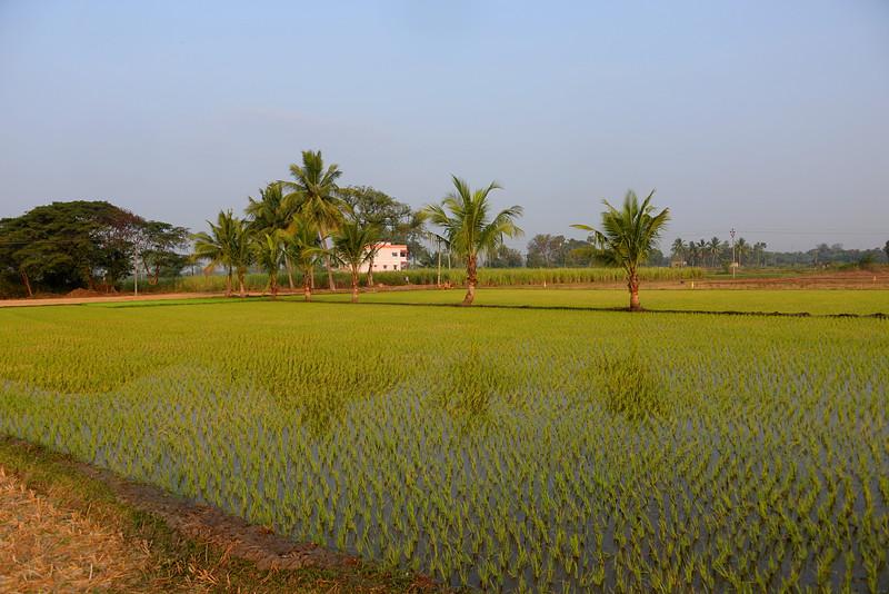 feb 14 0137 new rice