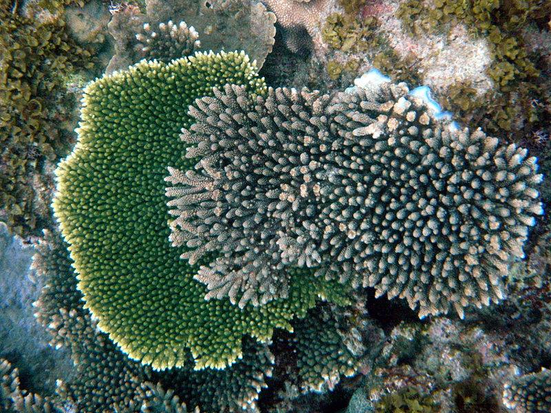 feb 14 2833 green coral
