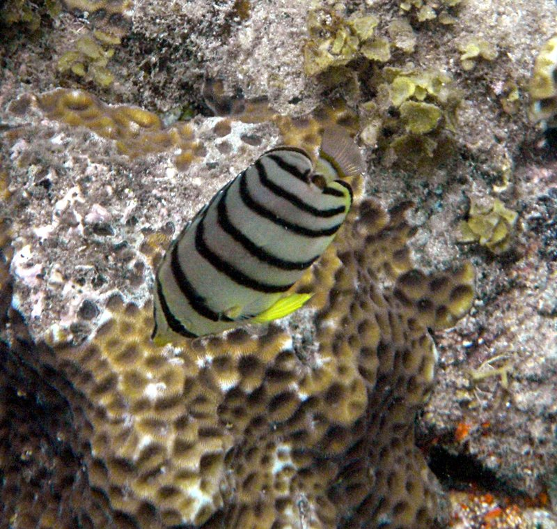 feb 14 2874 reef fish