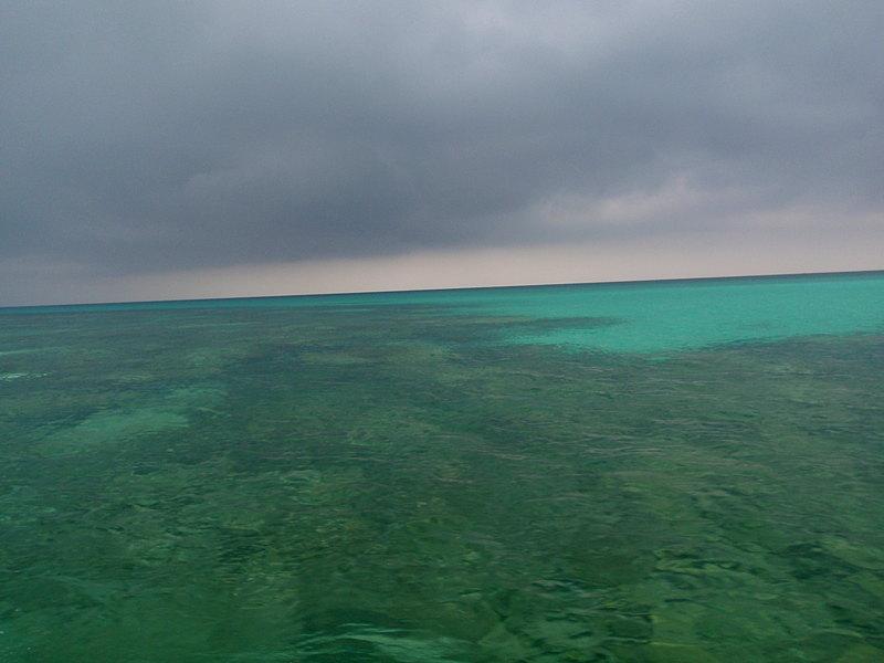 feb 14 2964 rain coral