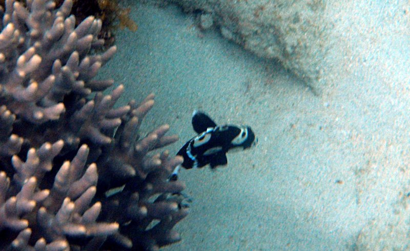 feb 14 3066 black white fish