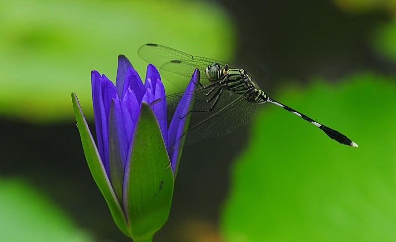 brian doyle essays hummingbird