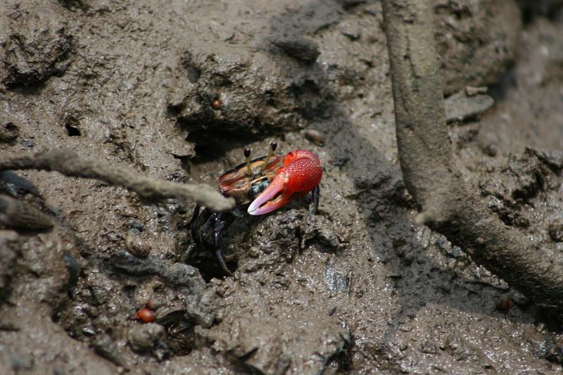 feb 16 9034 crab