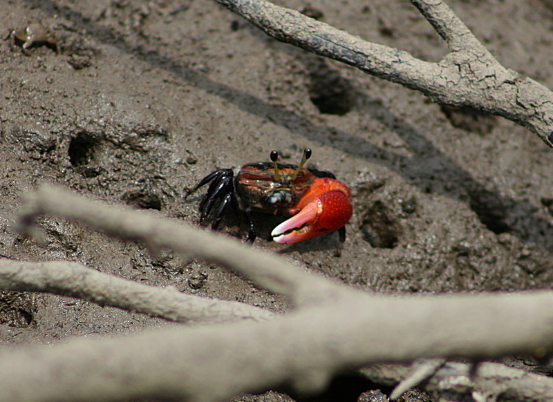 feb 16 9075 crab eyes