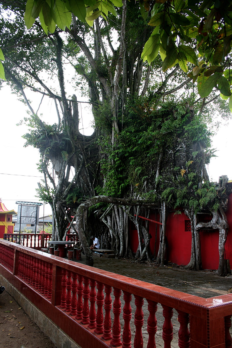 feb 16 9177 banyan temple
