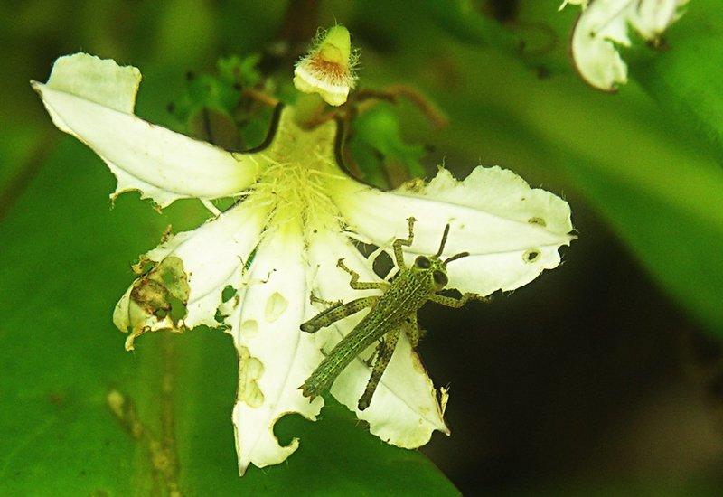 feb 17 1281 grasshopper