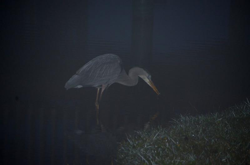 feb 17 5786 foggy heron