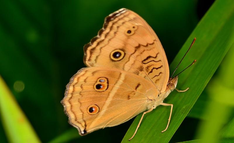 feb 19 6363 butterfly
