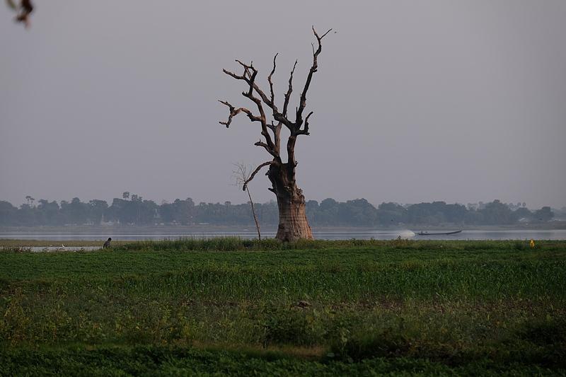 feb 20 5066 dead tree