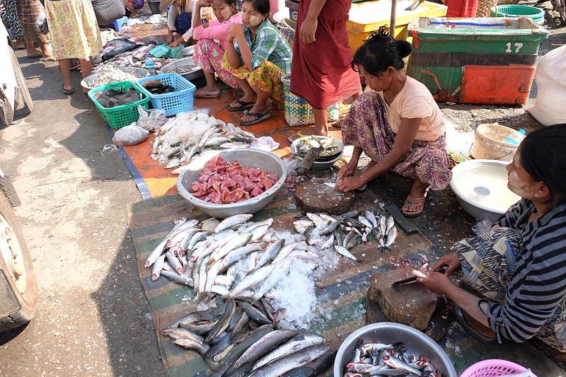 feb 21 5429 fish market