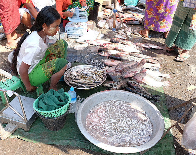 feb 21 5432 fish lady