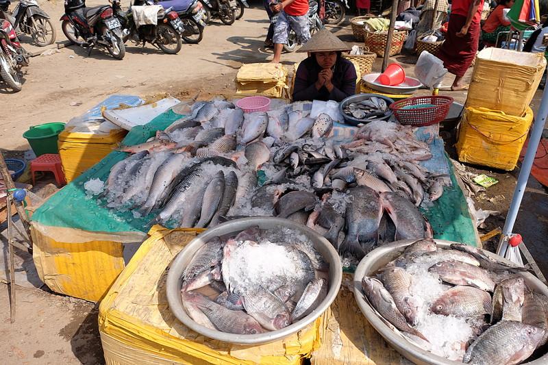feb 21 5433 fish