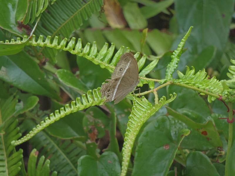 feb 25 0357 butterfly