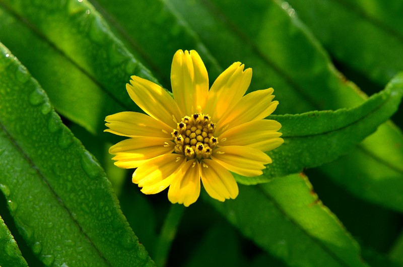 feb 25 6394 yellow flower