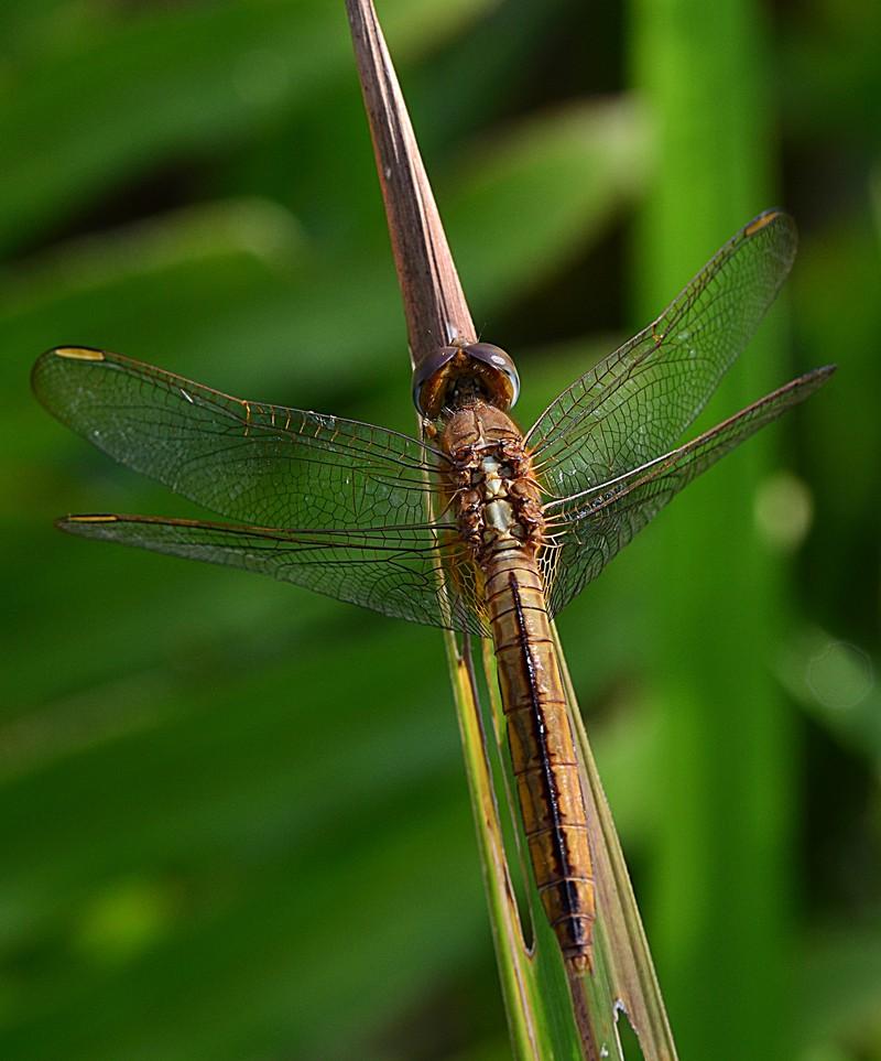 feb 25 6491 dragonfly