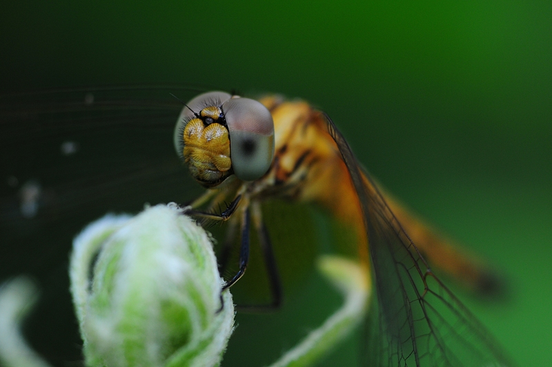 jan 01 3115 dragonfly matrix.jpg